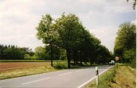 Naturdenkmale in Dreieich: Speierling-Allee
